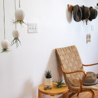 Superb Hanging Air Plant Pods By Michael McDowell Nice Design