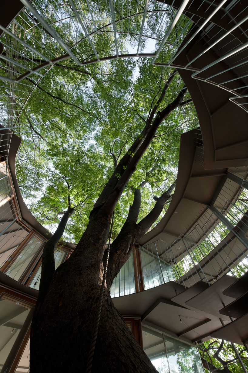 Ring Around a Tree by Tezuka Architects