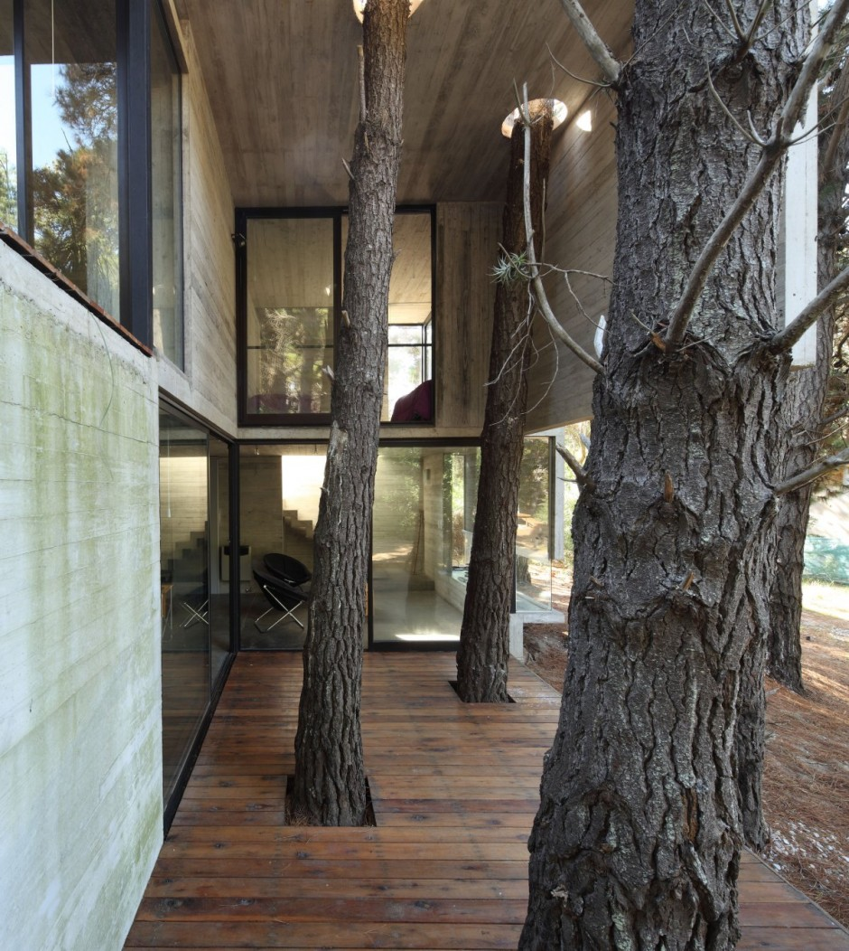 modern architecture and trees