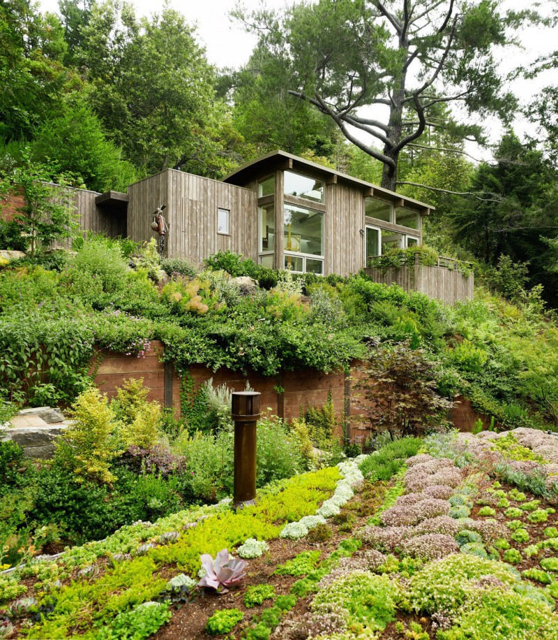 Artist Studio Overlooks Guest Cabin With Rooftop Garden