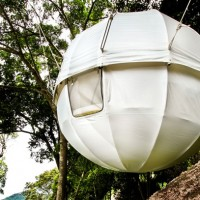 The Cocoon Tree
