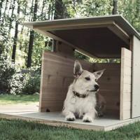 Puphaus By Pyramd Design Co.