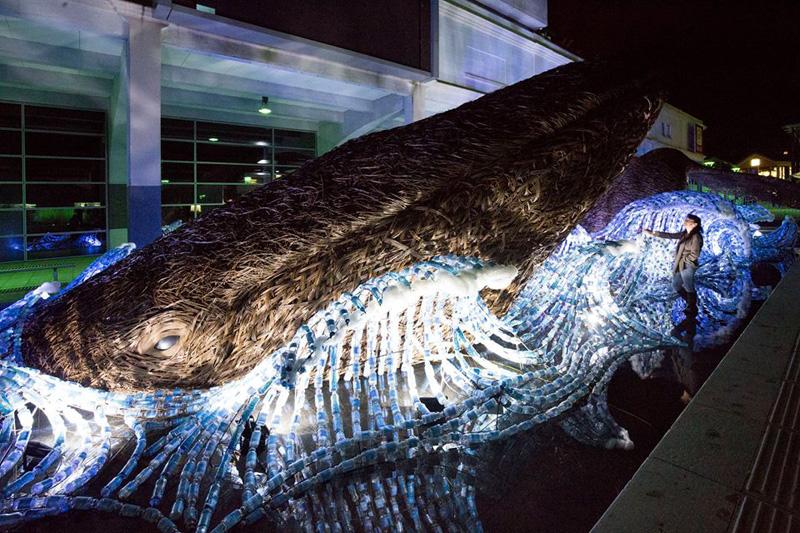 Bristol Whales By Cod Steaks