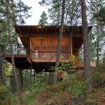 This Hillside Cabin Sits Among The Pine Trees In Montana