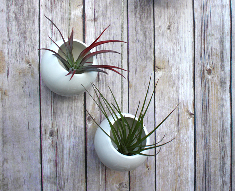 A pair of round ceramic wall planters by FettleAndFire #Planters #SmallPlanters #Plants #Decor #HomeDecor #GiftIdea #WallPlanter