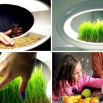 This lamp grows wheatgrass using only water and LED light