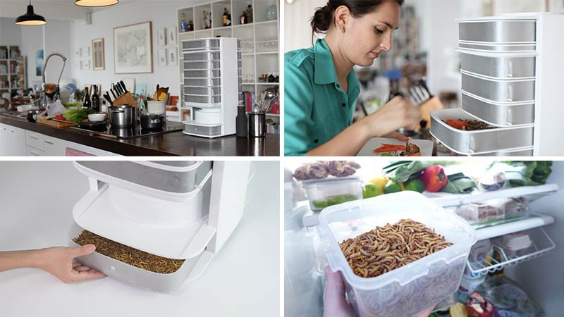This designer has created the world?s first countertop hive for edible insects
