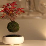 Floating Bonsai Trees Are A Thing Now