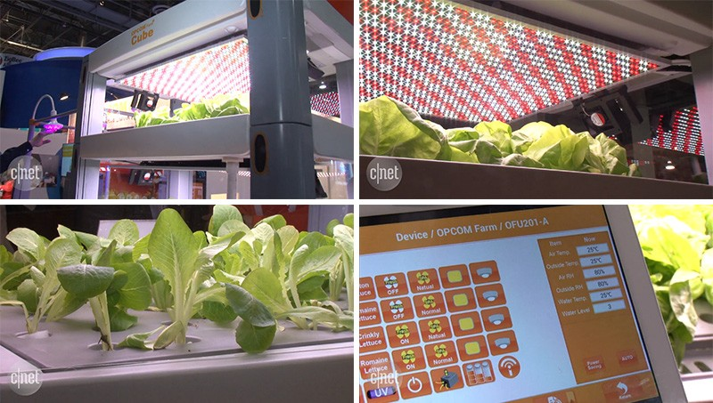 You can now grow your leafy greens inside with a Farm Cube