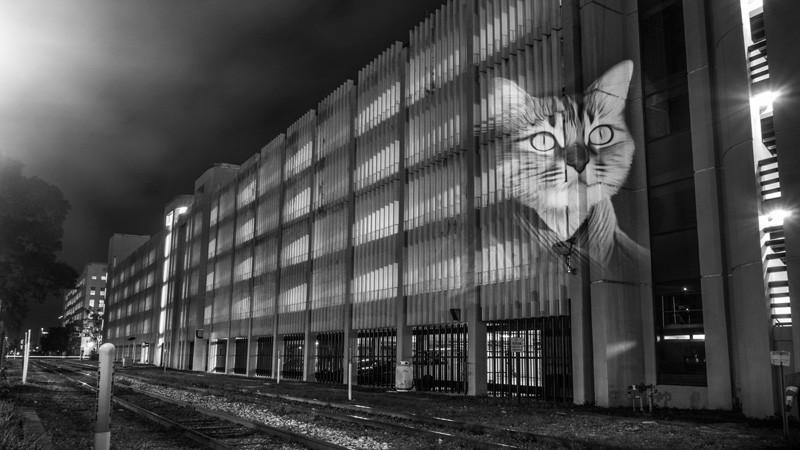 Street Artist Julien Nonnon's 'Safari Urbain' Takes Over Orlando