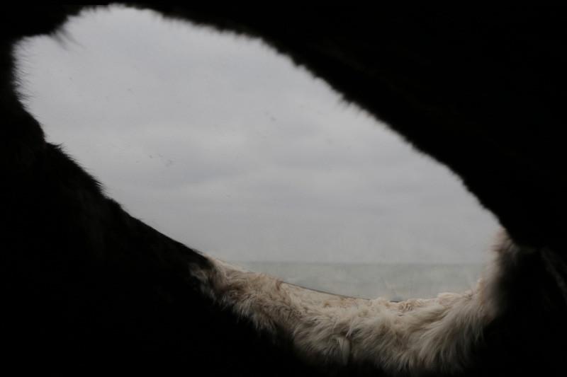 'In the Belly of a Bear', a sculpture by Lane Shordee, Caitlind r.c. Brown & Wayne Garrett.