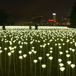 A field of illuminated roses has arrived in Hong Kong for Valentine's Day