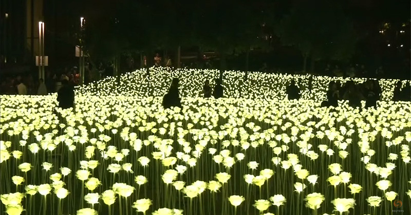 A Field Of Illuminated Roses Has Arrived In Hong Kong For