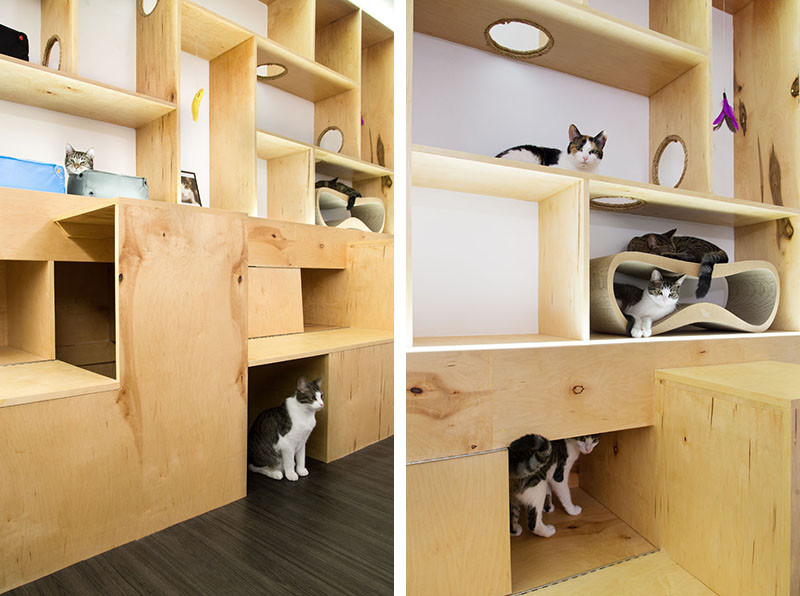 See Inside This Cat Cafe In New York