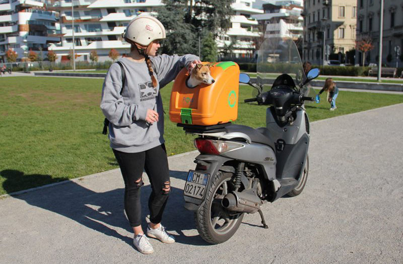 This hard-shell pet carrier has been designed to transport pets on