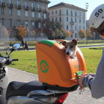 This hard-shell pet carrier has been designed to transport pets on scooters