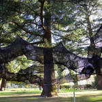 This tube-like netted structure lets you climb through the trees