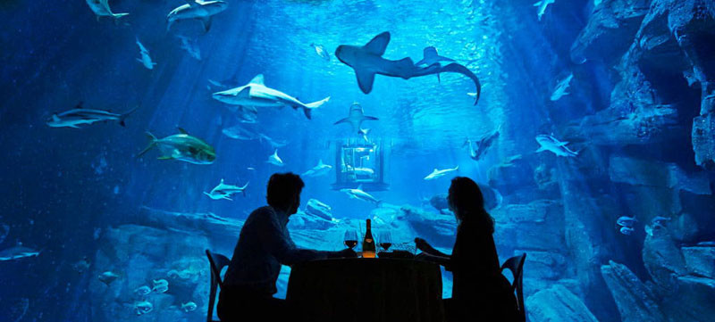 Underwater Room at Aquarium de Paris, via Airbnb