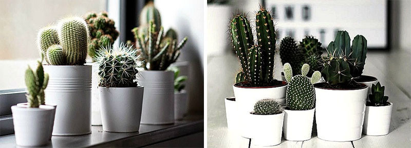 11 of the best plants to have on your coffee table for Plant de pot exterieur