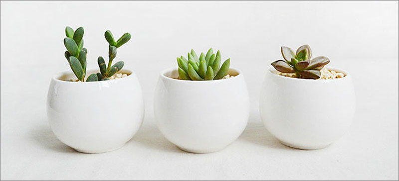 Plants that are perfect for coffee tables // Succulents are thick and fleshy plants that are designed to retain moisture, making them low maintenance, and require little watering.