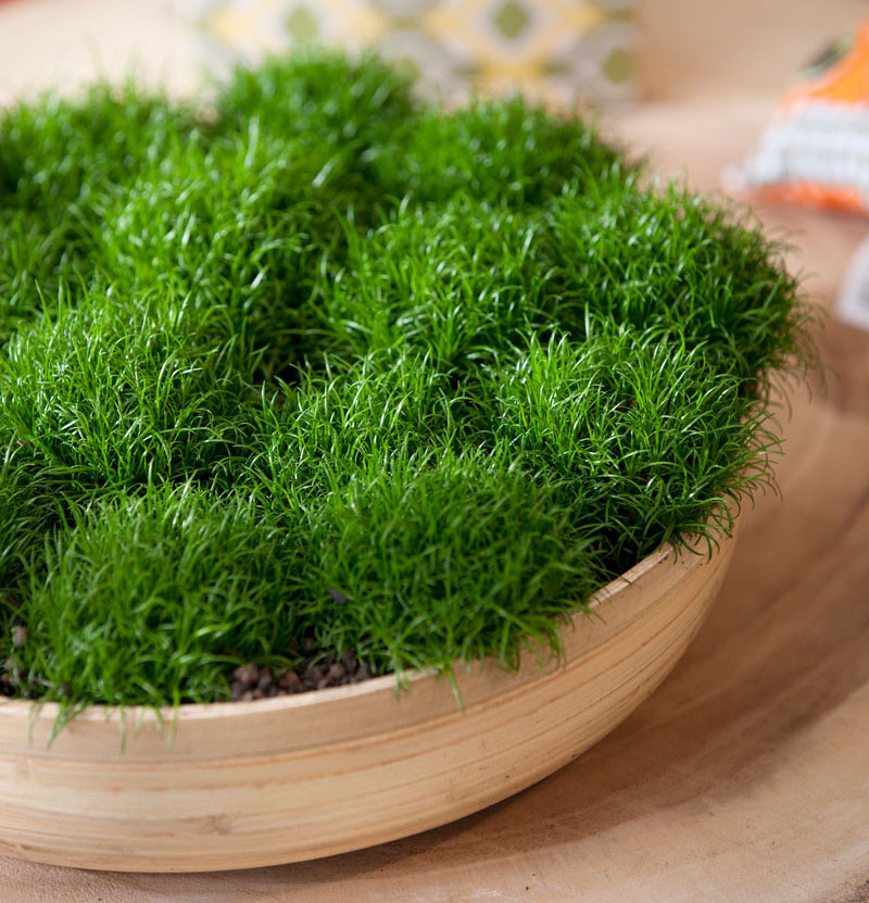 Plants that are perfect for coffee tables // Moss can be found worldwide, and is one of the most drought tolerant plants.
