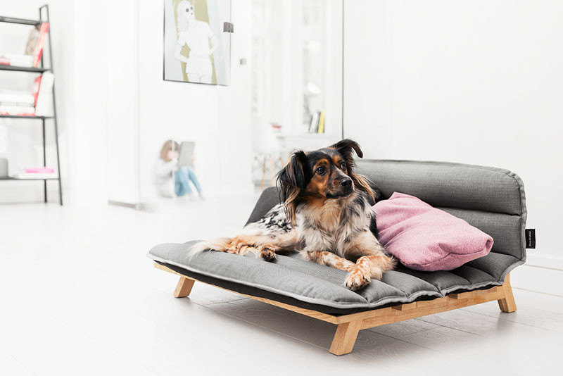 A dog bed that looks like normal furniture will keep your home?s contemporary style intact