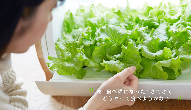 Foop, a counter-top hydroponic garden