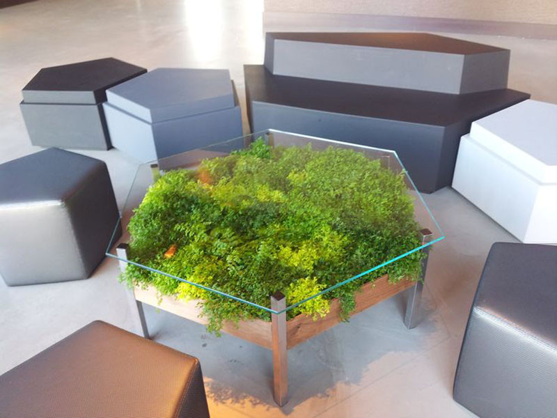 This Glass Top Enables You To View The Ferns And Moss Underneath While  Still Functioning As A Coffee Table.