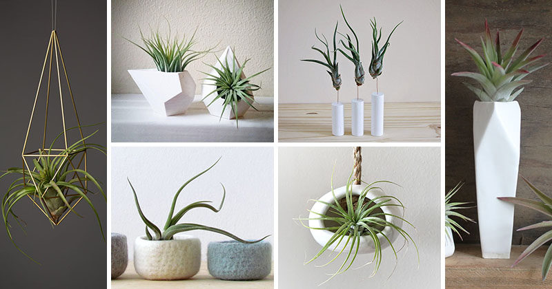 12 Elegant Ways To Bring Air Plants Into Your Home #AirPlants #ModernHomeDecor #Planters #ModernDecor