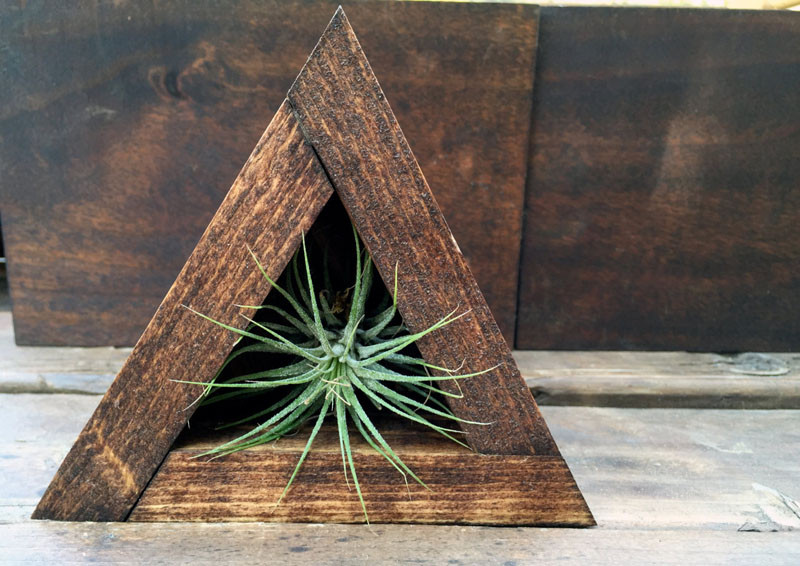 12 Elegant Ways To Bring Air Plants Into Your Home // This wooden air plant holder is a unique way to display air plants while adding a touch of wood to your decor. #AirPlants #ModernHomeDecor #Planters #ModernDecor