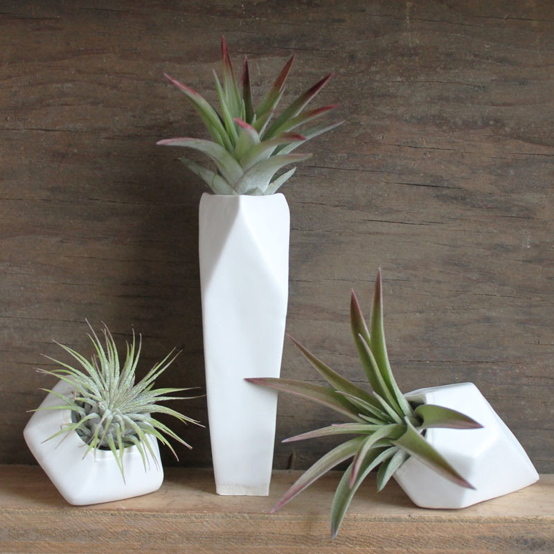12 Elegant Ways To Bring Air Plants Into Your Home // Planters grouped together always look good. #AirPlants #ModernHomeDecor #Planters #ModernDecor