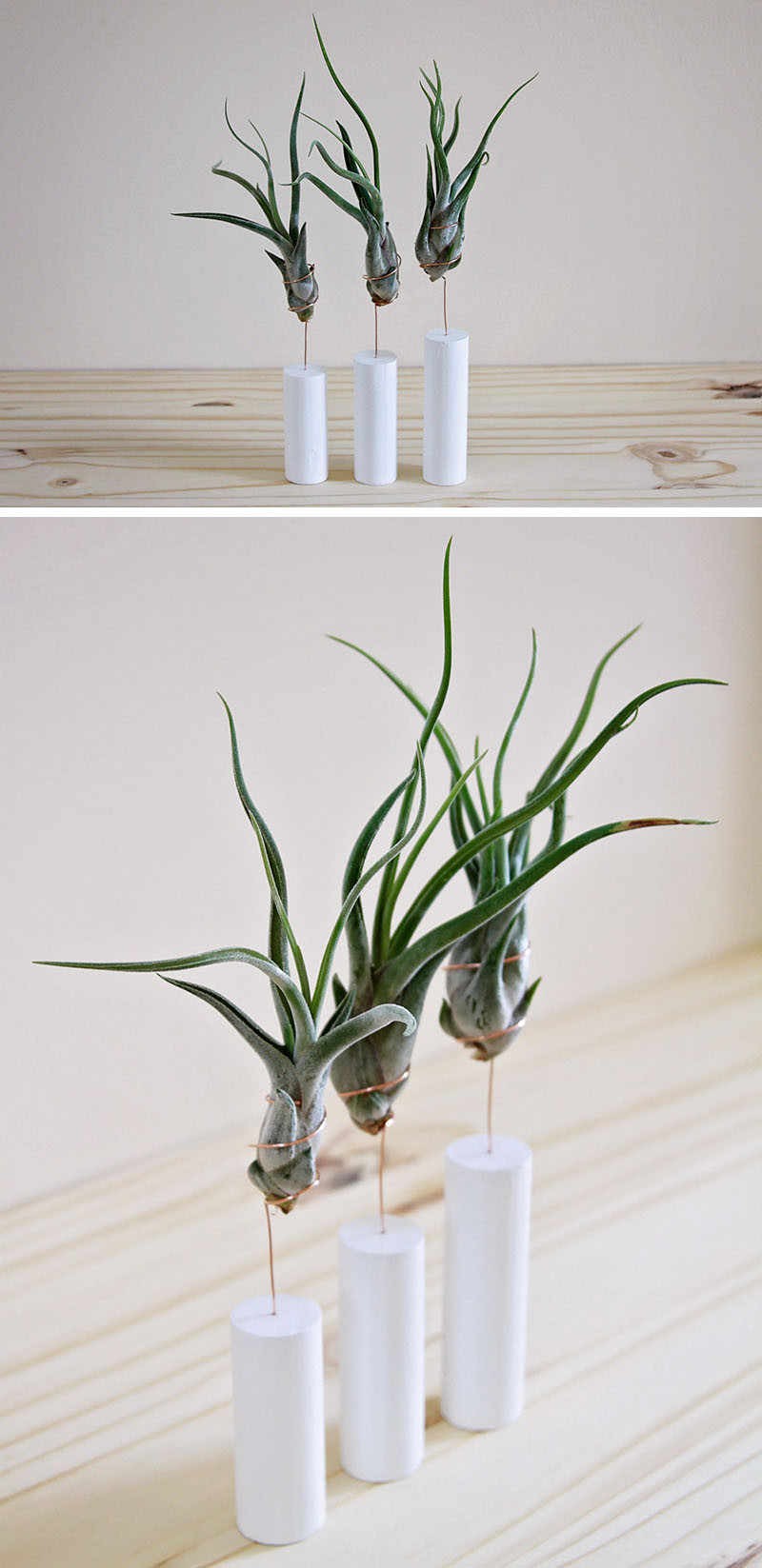 12 Elegant Ways To Bring Air Plants Into Your Home // Simple stands are another way to display air plants. #AirPlants #ModernHomeDecor #Planters #ModernDecor