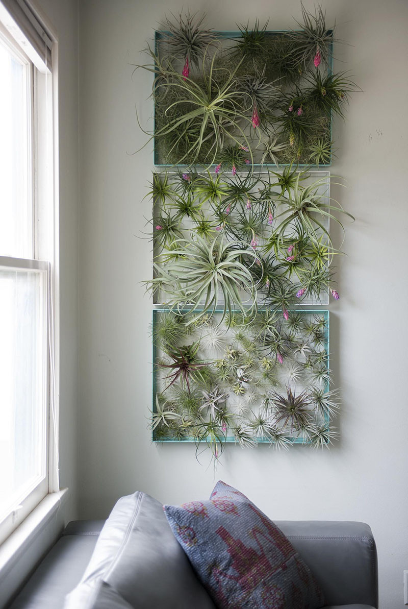 12 Elegant Ways To Bring Air Plants Into Your Home // This frame is a great way to display all of your air plants and makes for a beautiful living piece of artwork. #AirPlants #ModernHomeDecor #Planters #ModernDecor