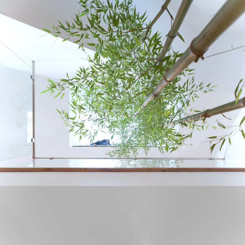 Above this staircase there is a large skylight centered over a bamboo garden. The bamboo rises up from the lower floor and eventually will reach the height of the second floor.