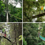 11 Treetop Walks Designed For Nature Lovers