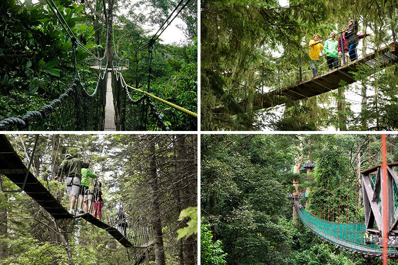 11 Tree Top Walks For Lovers Of Nature // & 11 Treetop Walks Designed For Nature Lovers | CONTEMPORIST