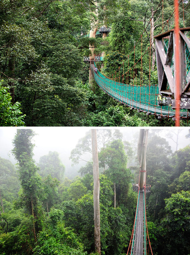 The Danum Valley canopy walk in Borneo Malaysia uses tree friendly engineering that allows the platforms to be adjusted as the tree grows and keeps cables ... & 11 Treetop Walks Designed For Nature Lovers | CONTEMPORIST