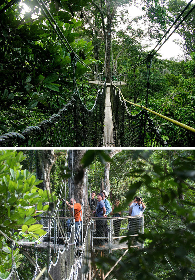 11 Tree Top Walks For Lovers Of Nature // The Iwokrama Canopy Walkway in central Guyana offers nine activities to make your tree top walk even more exciting.