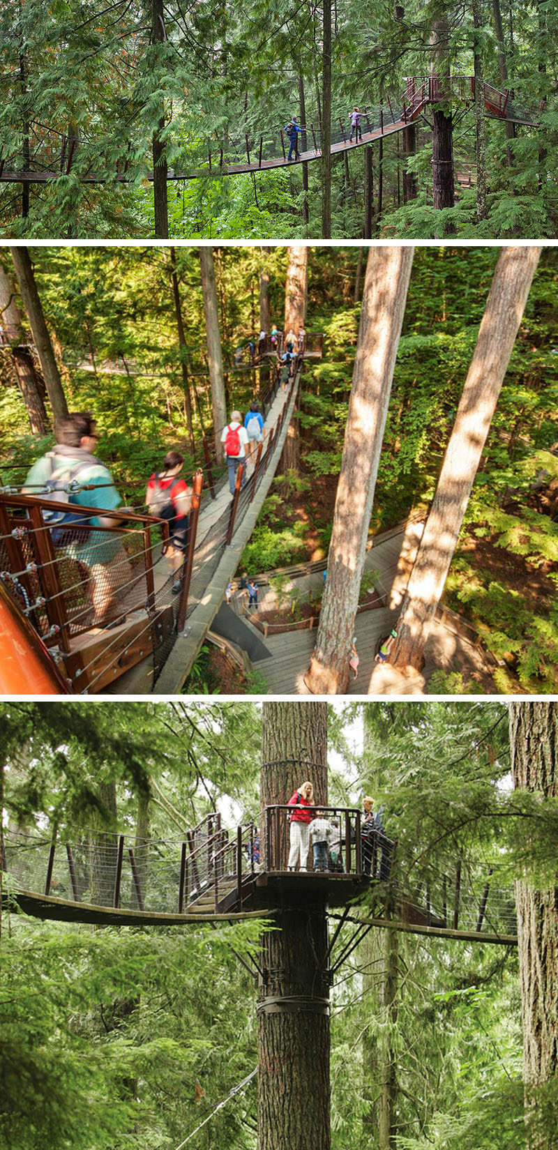 11 Tree Top Walks For Lovers Of Nature // Walk from Douglas fir to Douglas fir across a series of seven mini suspension bridges at the Capilano Treetop Adventure in Vancouver, BC.