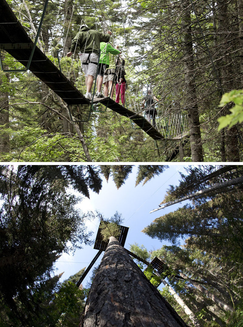 "11 Tree Top Walks For Lovers Of Nature // Take a ""Walk in the Treetops"" at Whitefish Mountain Resort in Montana."
