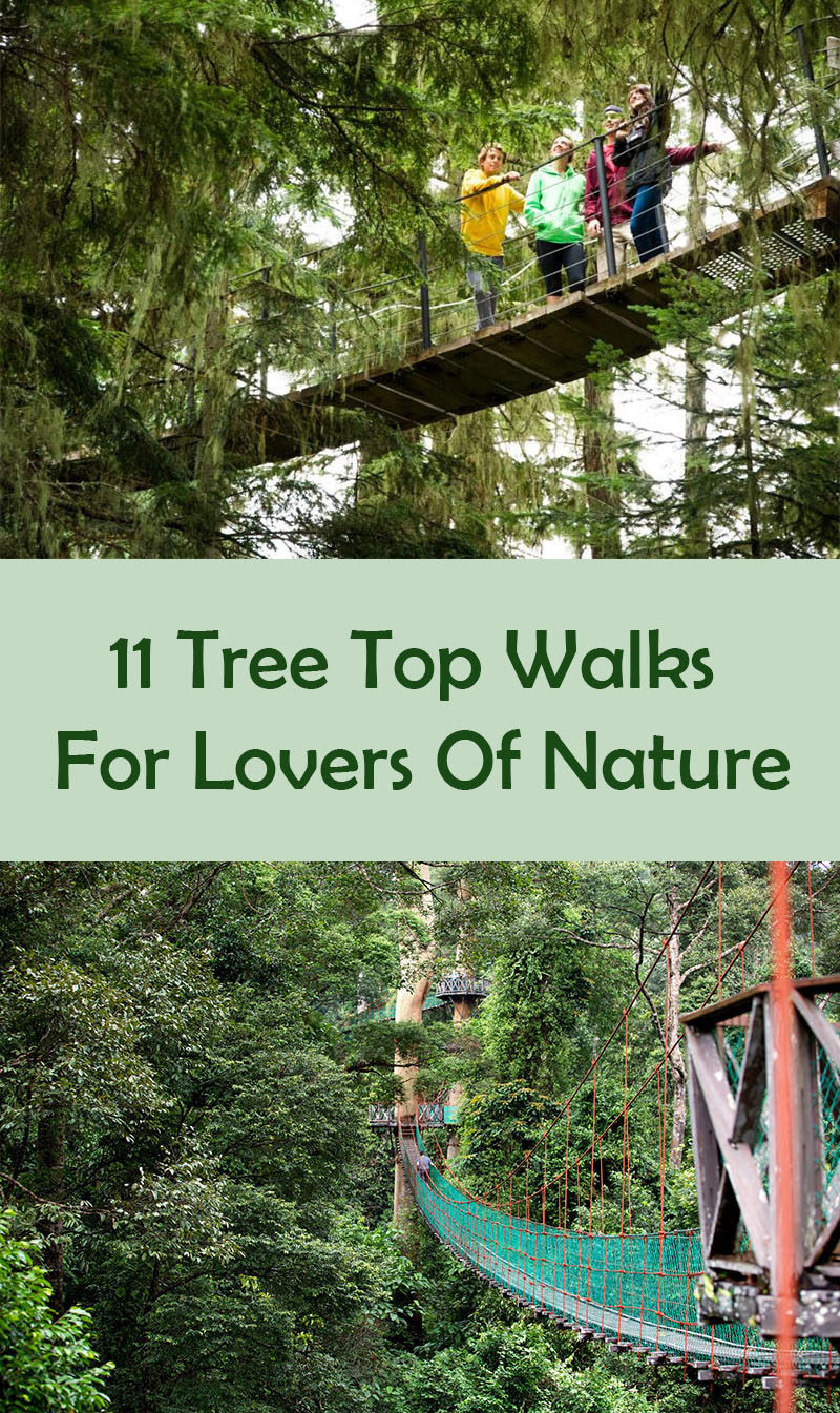 11 Tree Top Walks For Lovers Of Nature