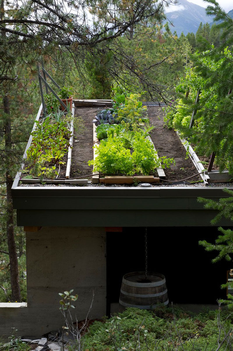 5 Things You Need For The Best Off-The-Grid Cabin // Food -- A fruit and vegetable garden is a must-have!