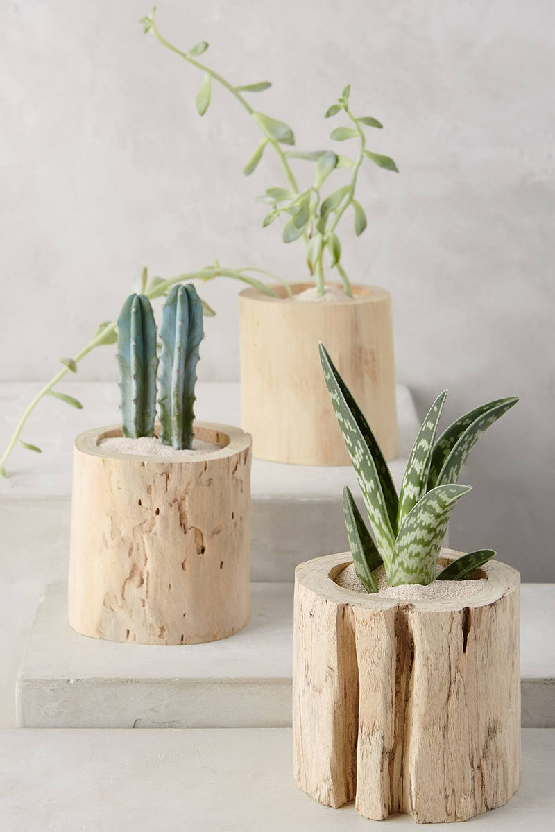9 Ideas For Including Tree Stumps In Your Home Decor // These little tree trunks are a cute way to give a stumpless plant the trunk it's always dreamed of, plus they just add to the naturalness of your decor.