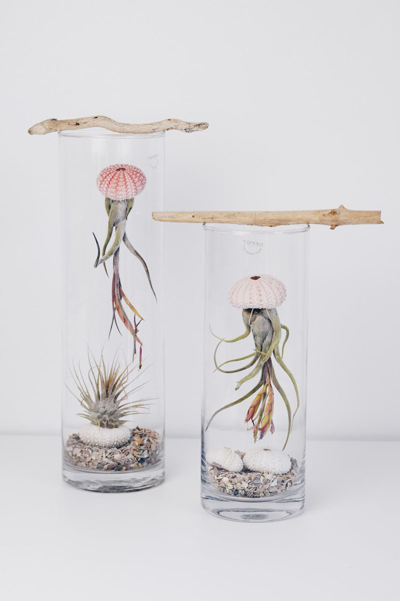 6 Creative Ideas For Displaying Air Plants In Your Home Contemporist