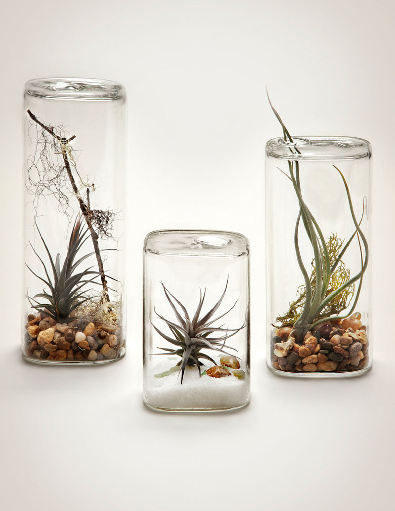 "6 Creative Ideas For Displaying AIR PLANTS In Your Home // Display Them In An ""Aerium"""