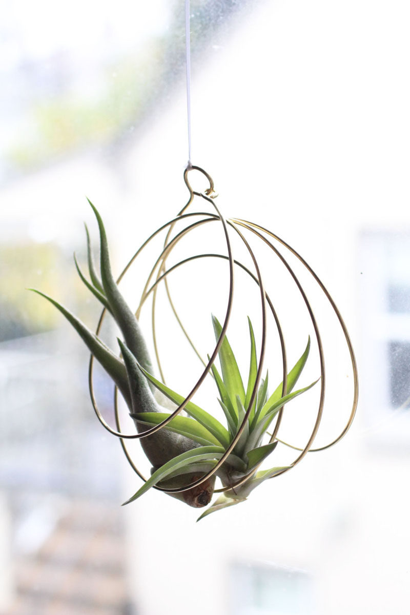 6 Creative Ideas For Displaying AIR PLANTS In Your Home // Hang Them From The Ceiling