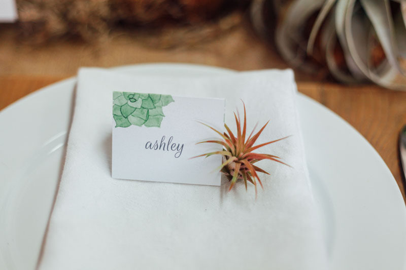 6 Creative Ideas For Displaying AIR PLANTS In Your Home // Use Them As Place Holders