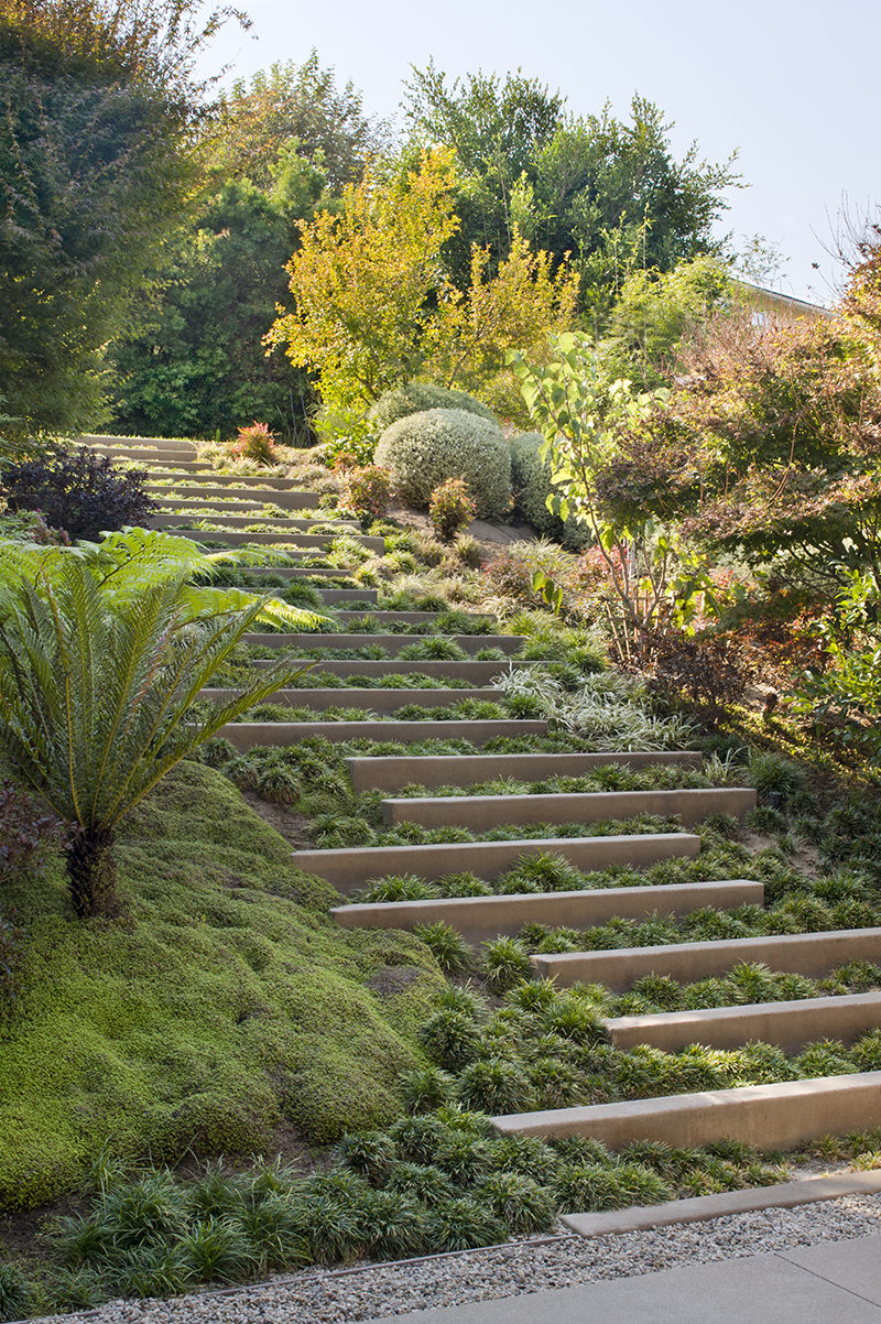 LANDSCAPING DESIGN IDEA - The stepped landscaping provides an interesting visual element to the sloped garden, as well as helping to retain soil in the case of potential erosion. Indigenous trees and plants to California have also been included in the design.