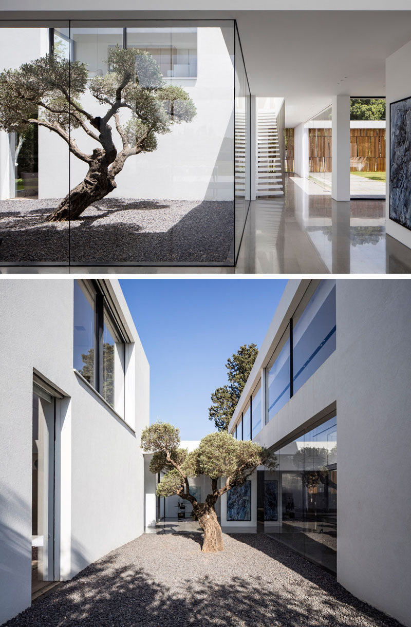 This courtyard, located between two areas of a house, allows for a tree to become a piece of art.