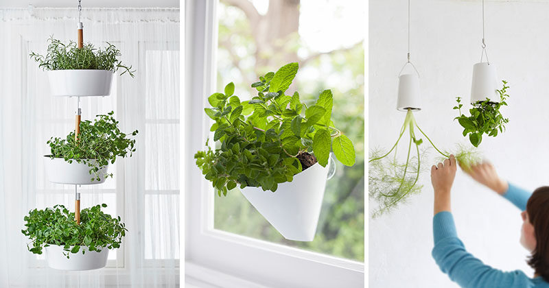 Indoor garden idea hang your plants from the ceiling - How to hang plants in front of windows ...